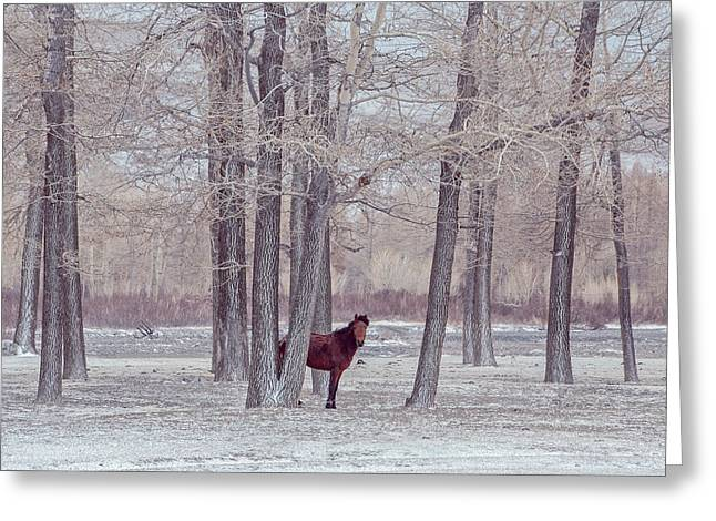 Lonely Horse In Front Of Snowy Winter Forest Greeting Card by Oksana Ariksina