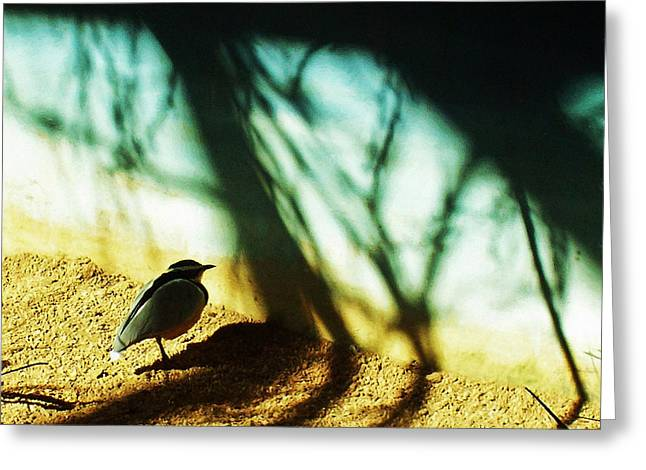 Lonely Little Bird Greeting Card by Shawna Rowe