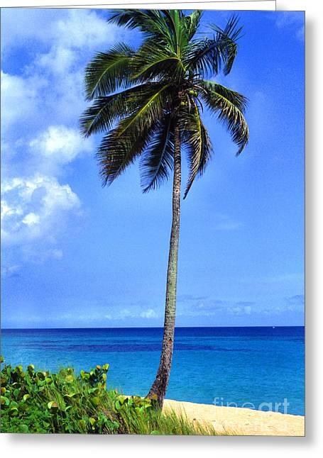 Puerto Rico Greeting Cards - Lonely Palm Tree Los Tubos Beach Greeting Card by Thomas R Fletcher