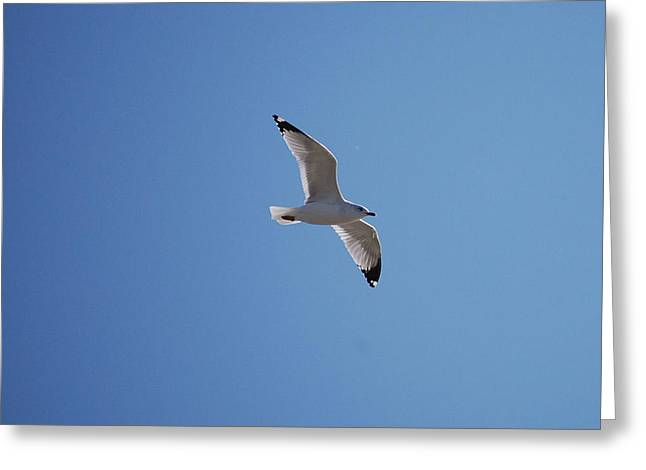 Animals Greeting Cards - Lonely Seagull Greeting Card by Heather Chaput