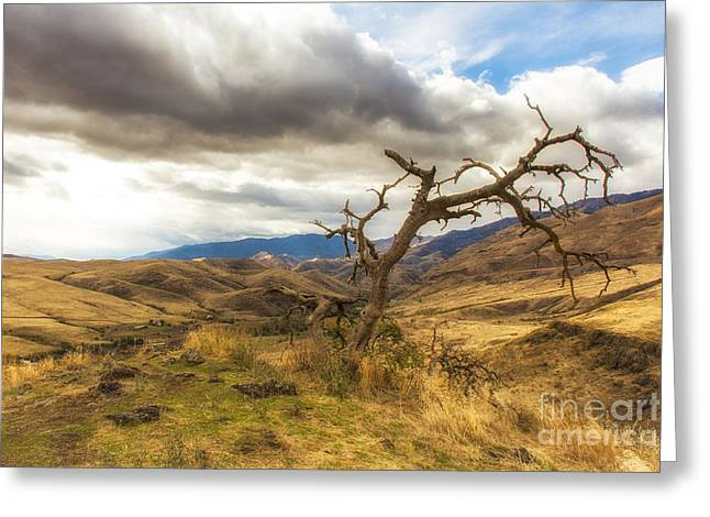 Double Rainbow Digital Art Greeting Cards - Lonely Tree in Whitebird Canyon Idaho Landscapes by Kaylyn Franks Greeting Card by Kaylyn Franks