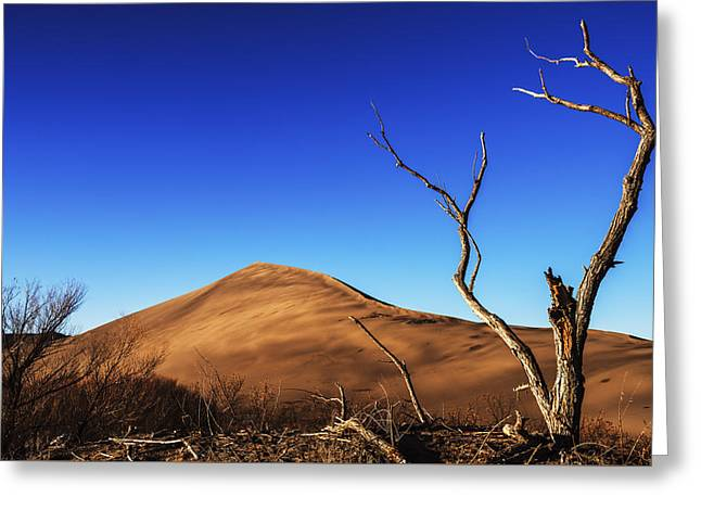 Sanddunes Greeting Cards - Lonely bare tree and sanddunes Greeting Card by Vishwanath Bhat