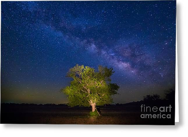 Griffin Greeting Cards - Milky Way Tree Greeting Card by Inge Johnsson