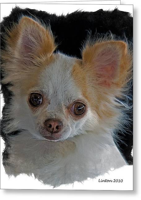 Long Coat Chihuahua Greeting Card by Larry Linton