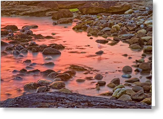 Maine Beach Greeting Cards - Long Exposure of Colorful Ocean waves and Seagull at Sunset. Greeting Card by Keith Webber Jr