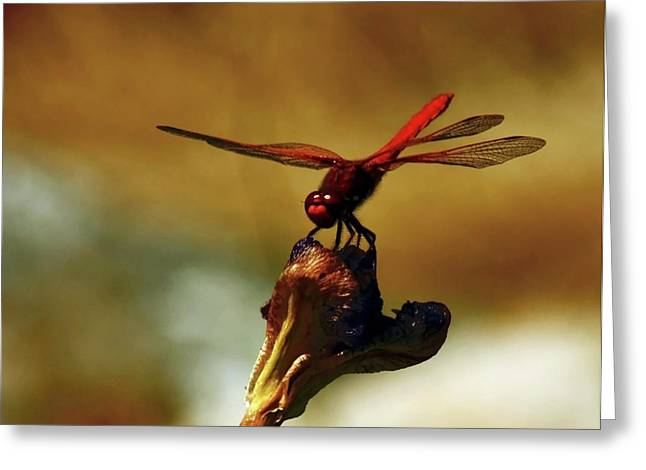 Dragonflies Photographs Greeting Cards - Long Summers Day Greeting Card by Barbara  White
