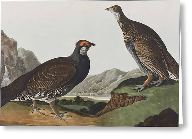 Long-tailed Or Dusky Grous Greeting Card by John James Audubon
