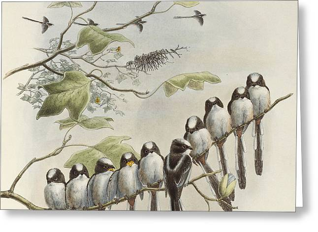 Long-tailed Tit  Greeting Card by John Gould