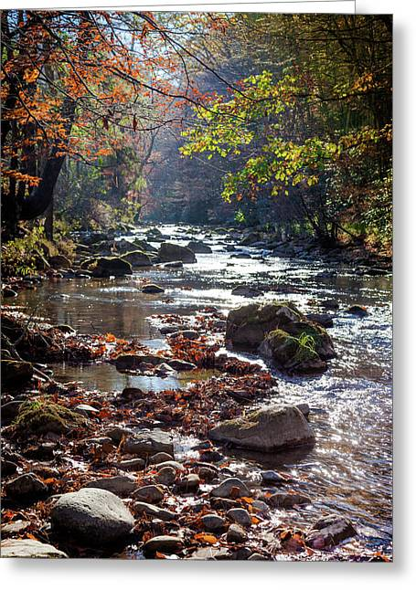 Longing For Home Greeting Card by Karen Wiles