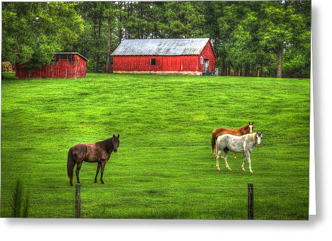 Hay Bales Greeting Cards - Look At Me Horses Greeting Card by Reid Callaway