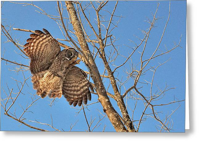 Hunting Bird Greeting Cards - Look at my claws when I land Greeting Card by Asbed Iskedjian
