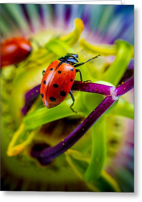 Ladybugs Greeting Cards - Look at the colors over there. Greeting Card by TC Morgan