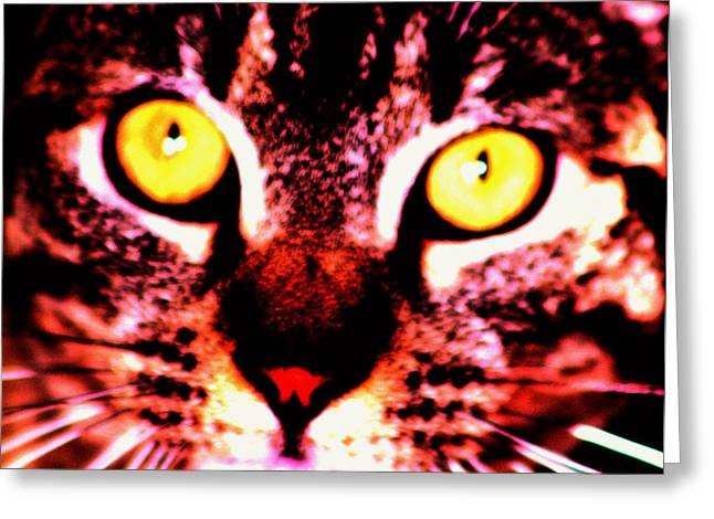 Close-up Of Cat Greeting Cards - Look in to my eyes Greeting Card by Nick Gustafson