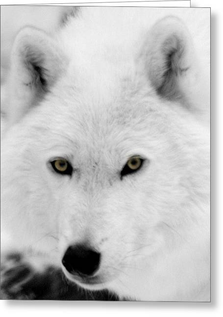 Arctic Wolf Greeting Cards - Look into my eyes Greeting Card by Larry Ricker