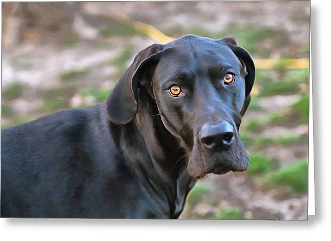 Dogs Digital Greeting Cards - Look Into My Eyes Greeting Card by Theresa Campbell