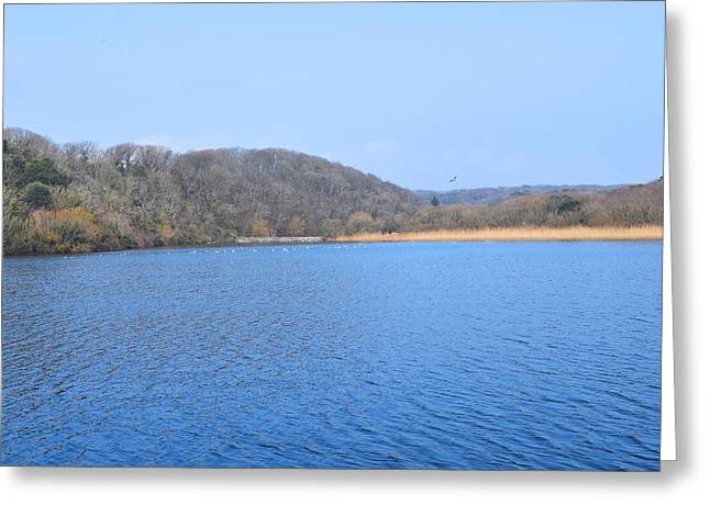 Day Lilly Greeting Cards - Looking Across the Pond 7 Greeting Card by David G Bevan