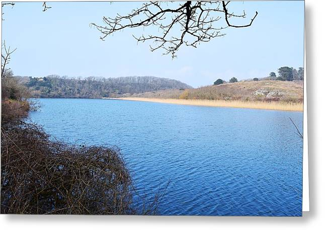 Day Lilly Greeting Cards - Looking Across the Pond 8 Greeting Card by David G Bevan