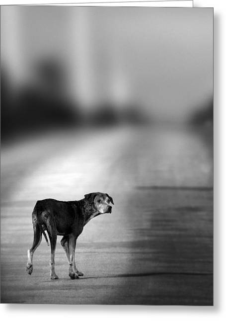 Dog Photo Greeting Cards - Looking Back Greeting Card by Amanda And Christopher Elwell
