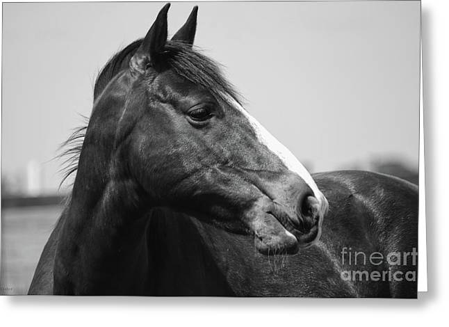 Looking Bw Greeting Card by J M Lister