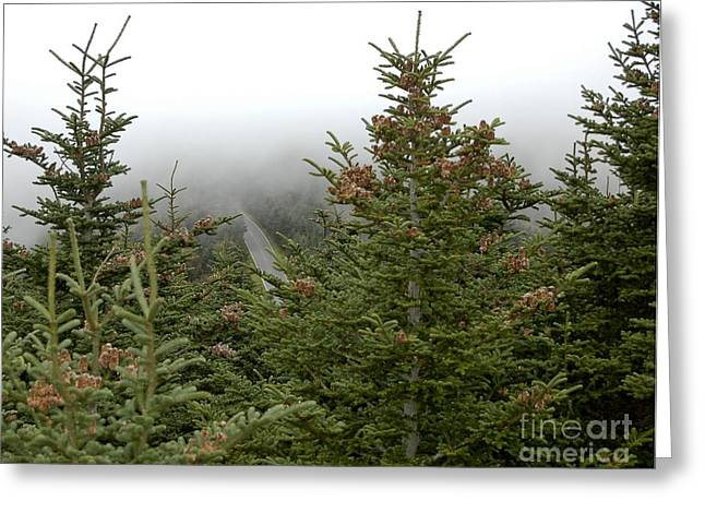 Landscape Framed Prints Greeting Cards - Looking Down From Mnt. Mitchell Greeting Card by Johnnie Stanfield