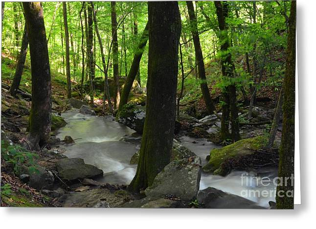 Arkansas Greeting Cards - Looking Downstream Greeting Card by Deanna Cagle