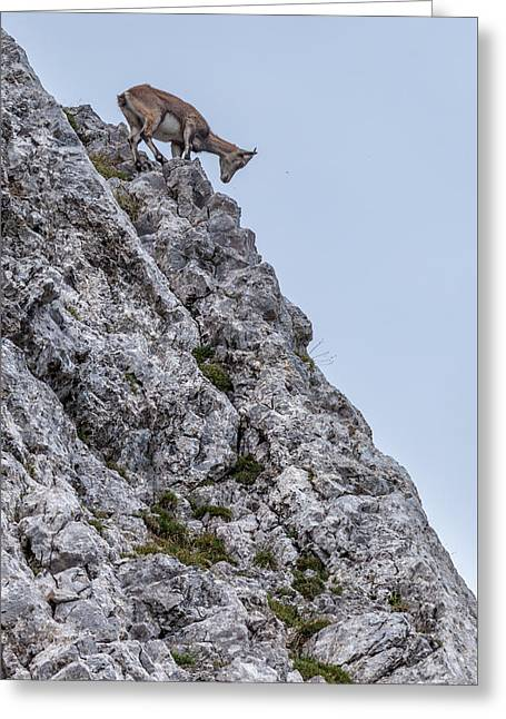 Swiss Photographs Greeting Cards - Looking for a Meal Greeting Card by W Chris Fooshee