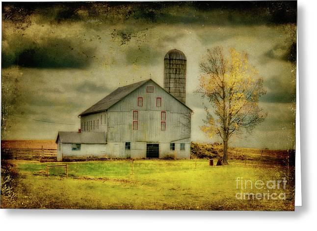 Barn Digital Greeting Cards - Looking For Dorothy Greeting Card by Lois Bryan