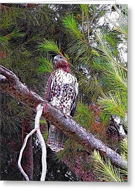 Red Tail Hawk Digital Art Greeting Cards - Looking For Prey - Red Tailed Hawk Greeting Card by Glenn McCarthy Art and Photography