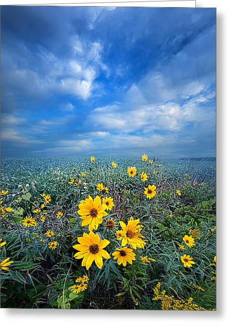 Green Leafs Greeting Cards - Looking For Space Greeting Card by Phil Koch