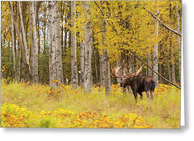 Looking For The Girls Greeting Card by Tim Grams
