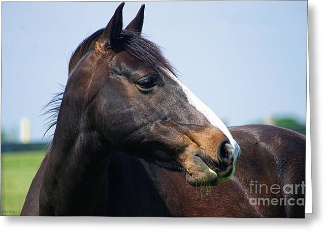Caballo. Fence Greeting Cards - Looking Greeting Card by J M Lister