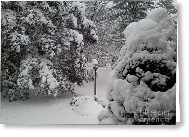 Record Breaker Greeting Cards - Looking Out My Front Door Greeting Card by Carol Wisniewski