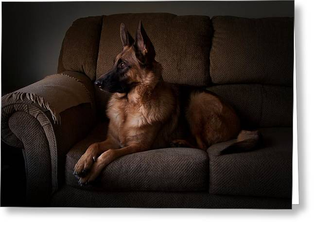 Gsd Greeting Cards - Looking Out The Window - German Shepherd Dog Greeting Card by Angie Tirado