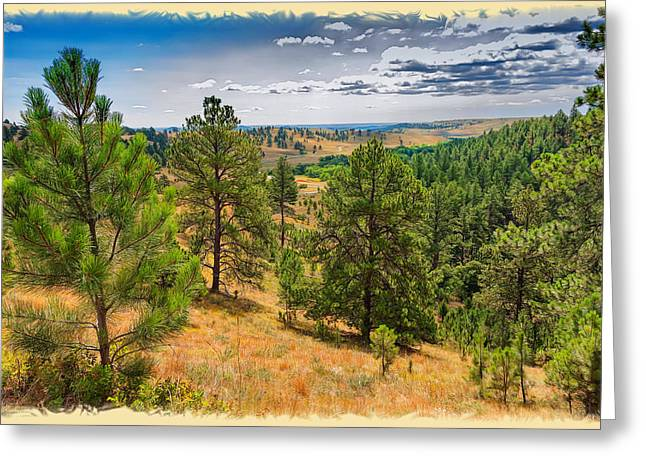 Wildlife Refuge. Greeting Cards - Looking Through Custer State Park Greeting Card by John Bailey