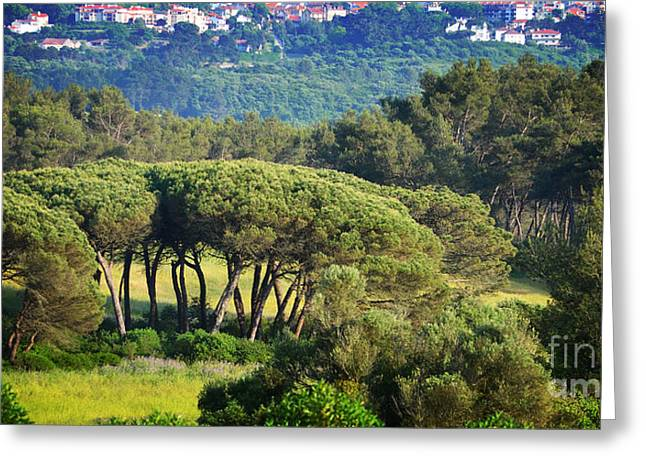 Red Tile Roof Greeting Cards - Looking Towards Sintra Greeting Card by Mary Machare