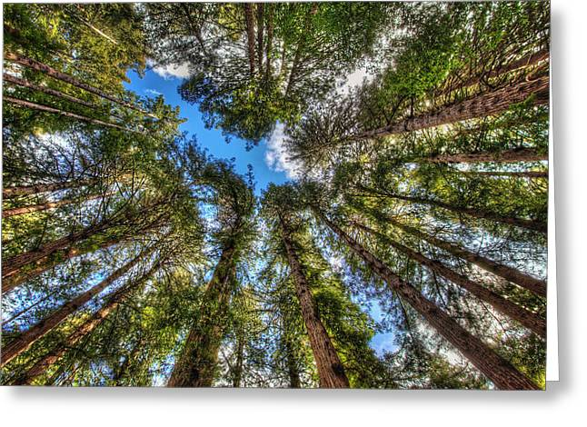 Marin County Greeting Cards - Looking Up at Muir Woods Forest Redwood Trees Greeting Card by Jennifer Rondinelli Reilly