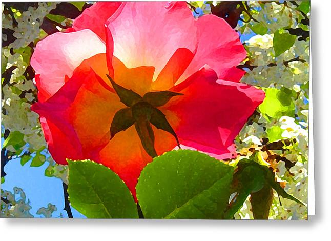 Floral Posters Greeting Cards - Looking Up at Rose and Tree Greeting Card by Amy Vangsgard