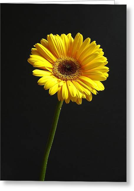 Top Model Greeting Cards - Looking Up Greeting Card by Juergen Roth