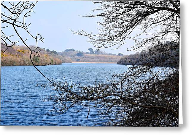 Day Lilly Greeting Cards - Looking Up the Pond 2  Greeting Card by David G Bevan