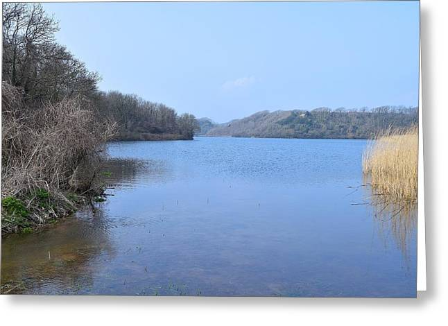 Day Lilly Greeting Cards - Looking Up the Pond 7 Greeting Card by David G Bevan