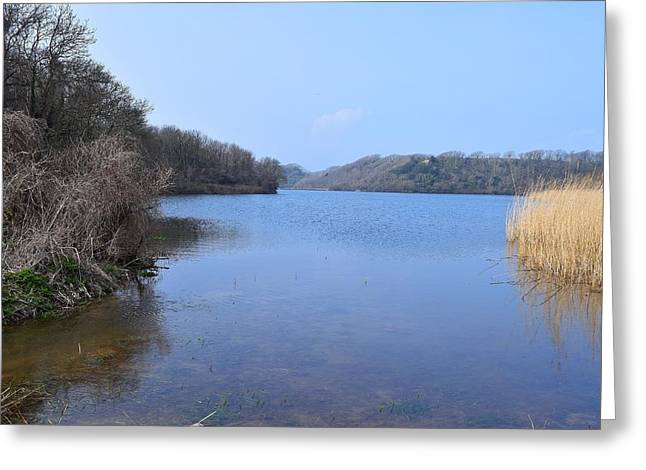 Day Lilly Greeting Cards - Looking Up the Pond 8 Greeting Card by David G Bevan