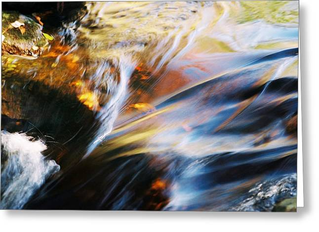 Black Rock Yellow Leaves Water Greeting Cards - Lorelei Greeting Card by Joanne Baldaia - Printscapes