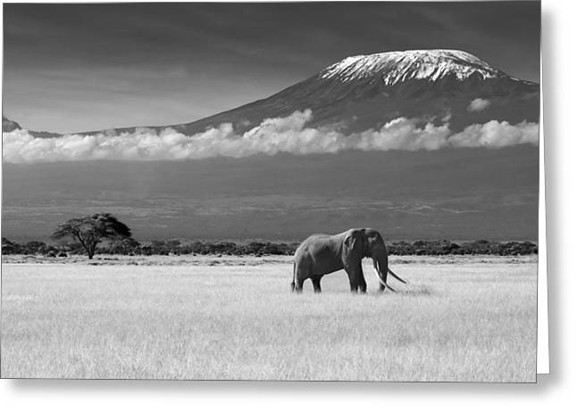 Elephants Greeting Cards - Lost Colors Ii Greeting Card by Ibrahim Canakci
