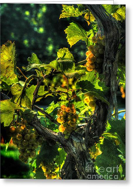 River View Greeting Cards - Lost Creek Chardonel Greeting Card by William Fields