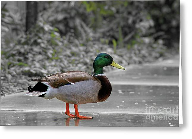 By Myself Greeting Cards - Lost Duck Greeting Card by Mariola Bitner