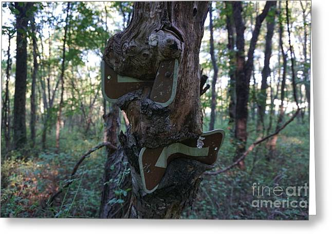 Aperture Greeting Cards - Lost in a Tree Greeting Card by Peter Motta