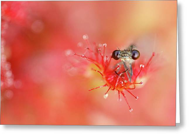 Lost In Red Greeting Card by Roeselien Raimond