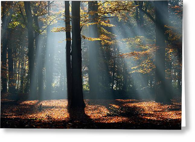 Licht Greeting Cards - Lost in The Light Greeting Card by Roeselien Raimond
