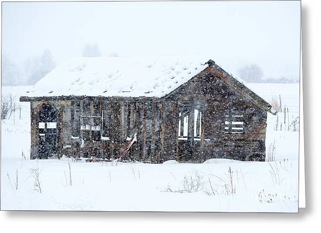 Lost In Winter Greeting Card by Mike Dawson