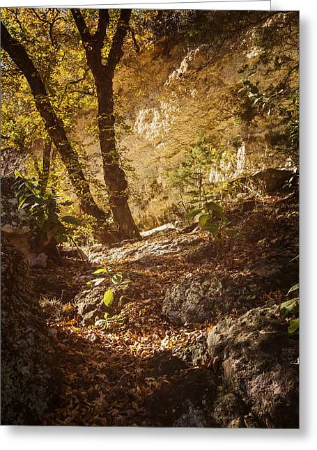 Greeting Cards - Lost Maples State Natural Area Greeting Card by Joan Carroll